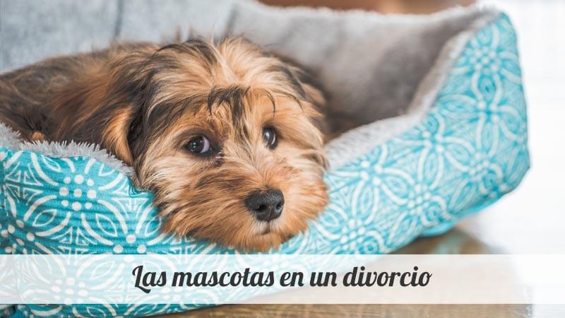 Las mascotas en un divorcio